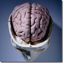 brain-srinkin